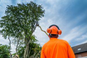 Big Easy Tree Removal Arborist in Harahan