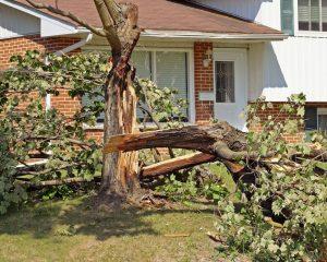 fallen tree services