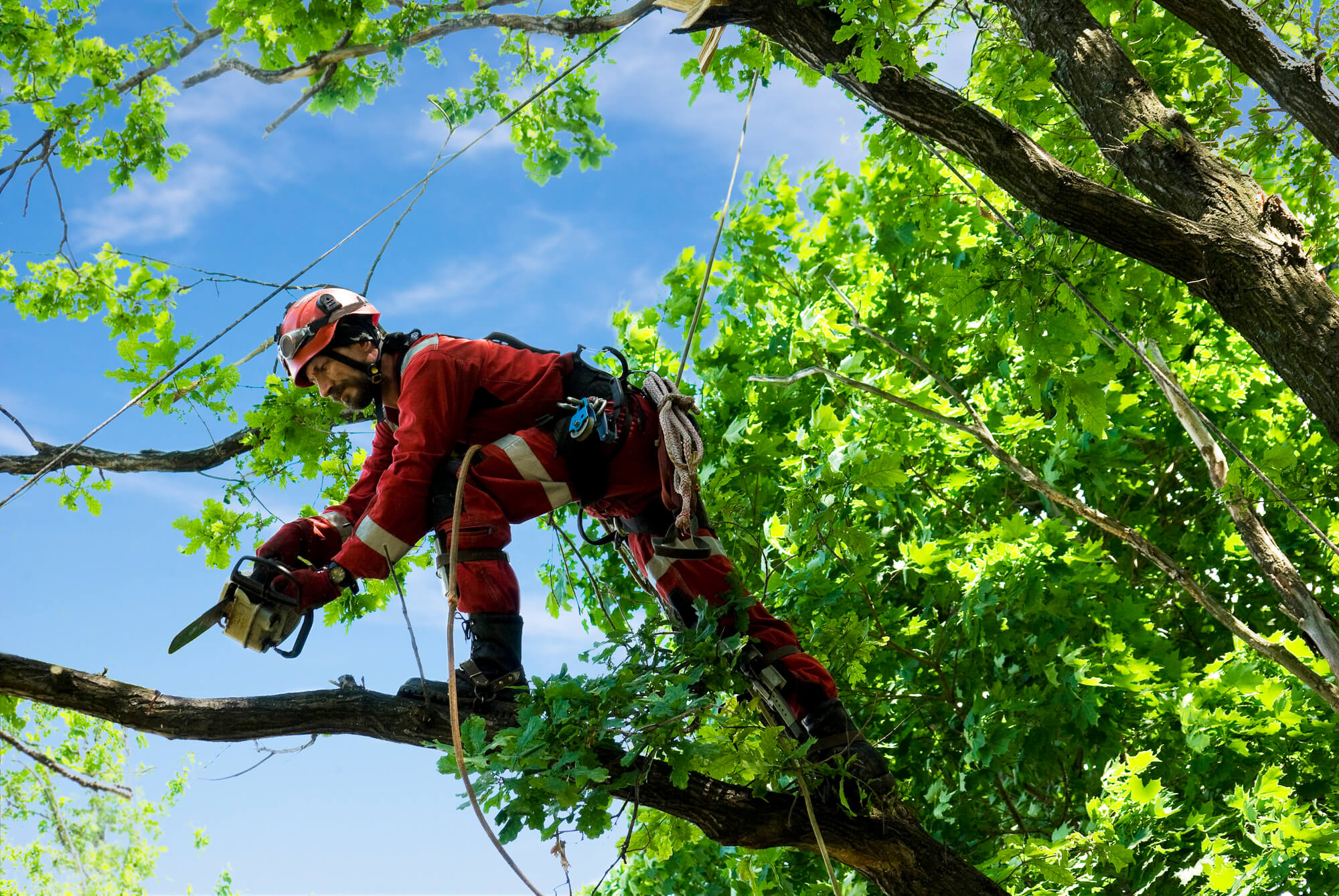 Laplace tree service company - Big Easy Tree Removal