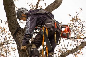 Big Easy Tree Removal Cutting Tree Branches in Slidell