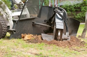 Stump Grinding Service in Slidell - Big Easy Tree Removal