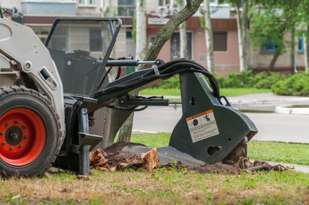 Removing Tree Stump Service in Metairie - Big Easy Tree Removal