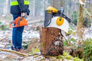 Tree Stump Removal in Louisiana