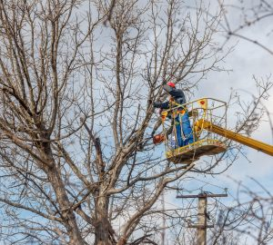 Tree Cutting with Safety Procedures - Big Easy Tree Removal