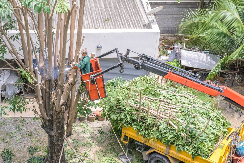 Cutting Tree Branches in Kenner, LA - Big Easy Tree Removal