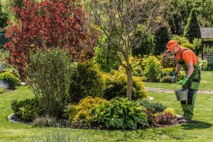 Big Easy Tree Removal Tree Fertilization Services