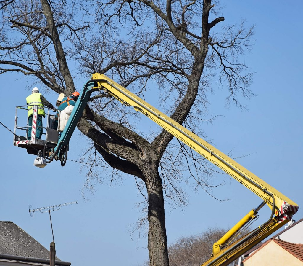 Big Easy Tree Removal - Tree Trimming Service in Metairie, LA
