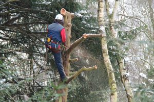 Tree Branches Removal - Big Easy Tree Removal