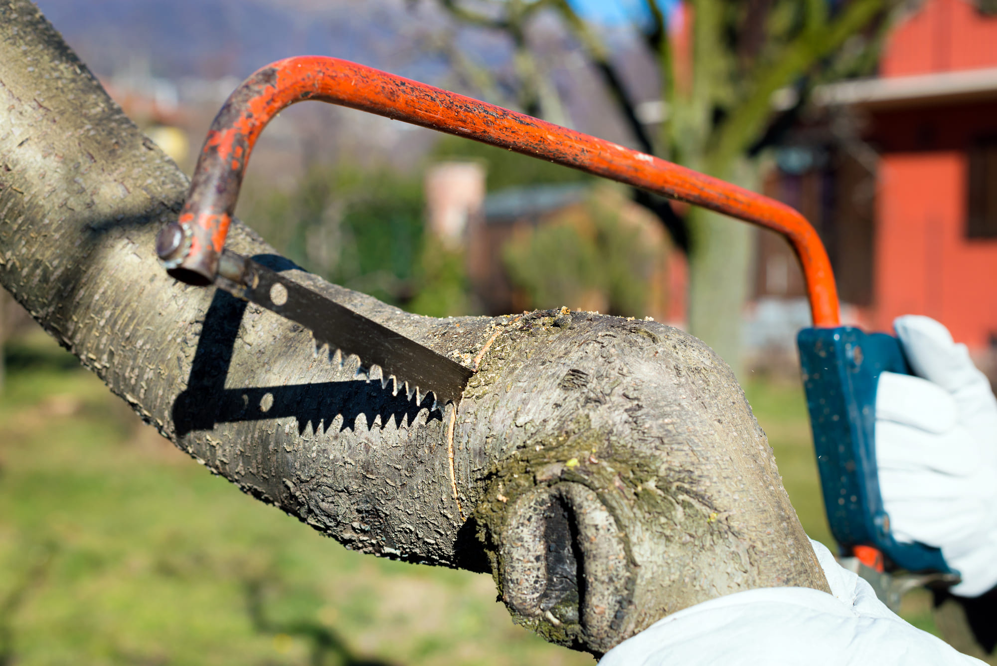 arborist cutting a tree - Big Easy Tree Removal