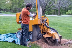 Worker operating a stump grinder