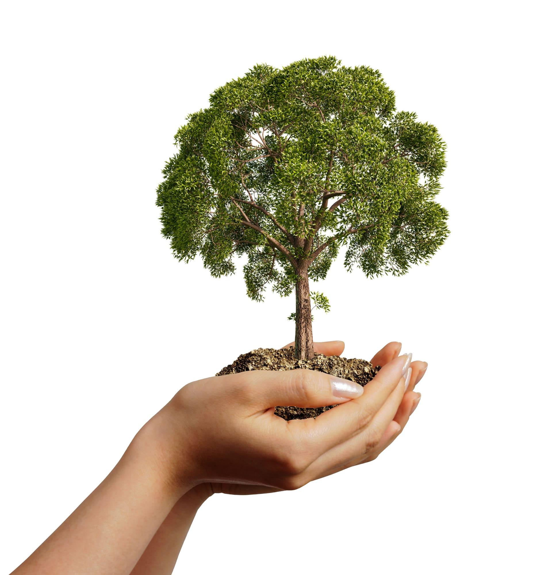 emergency tree care - Big Easy Tree Removal
