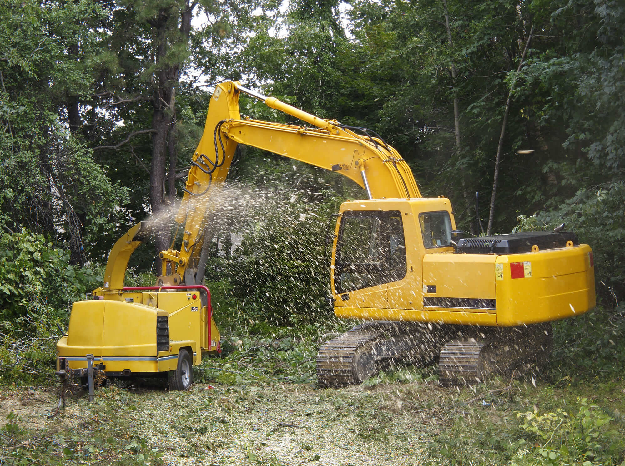 mandeville tree services - Big Easy Tree Removal