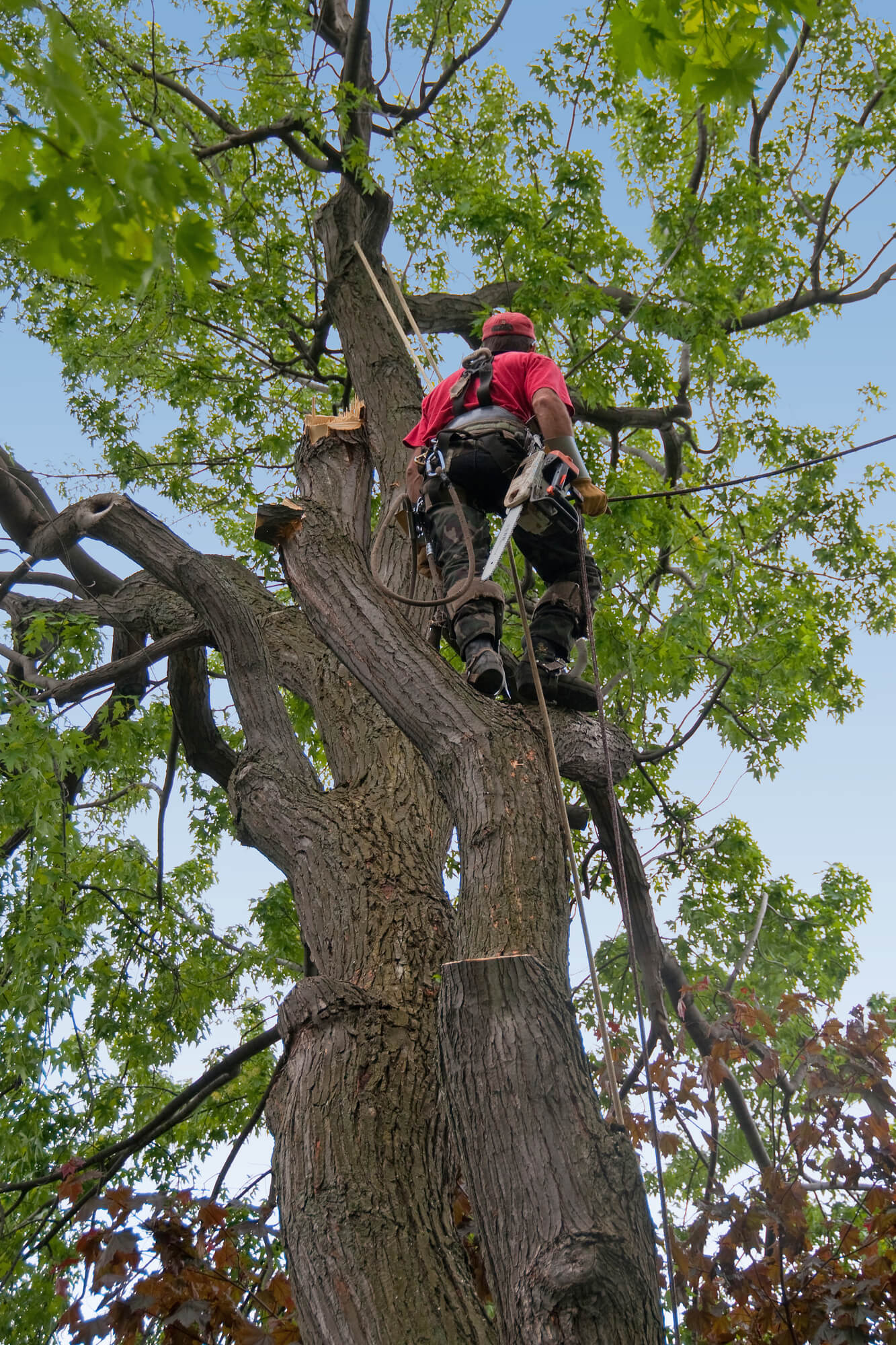 professional tree trimmer in louisiana - Big Easy Tree Removal