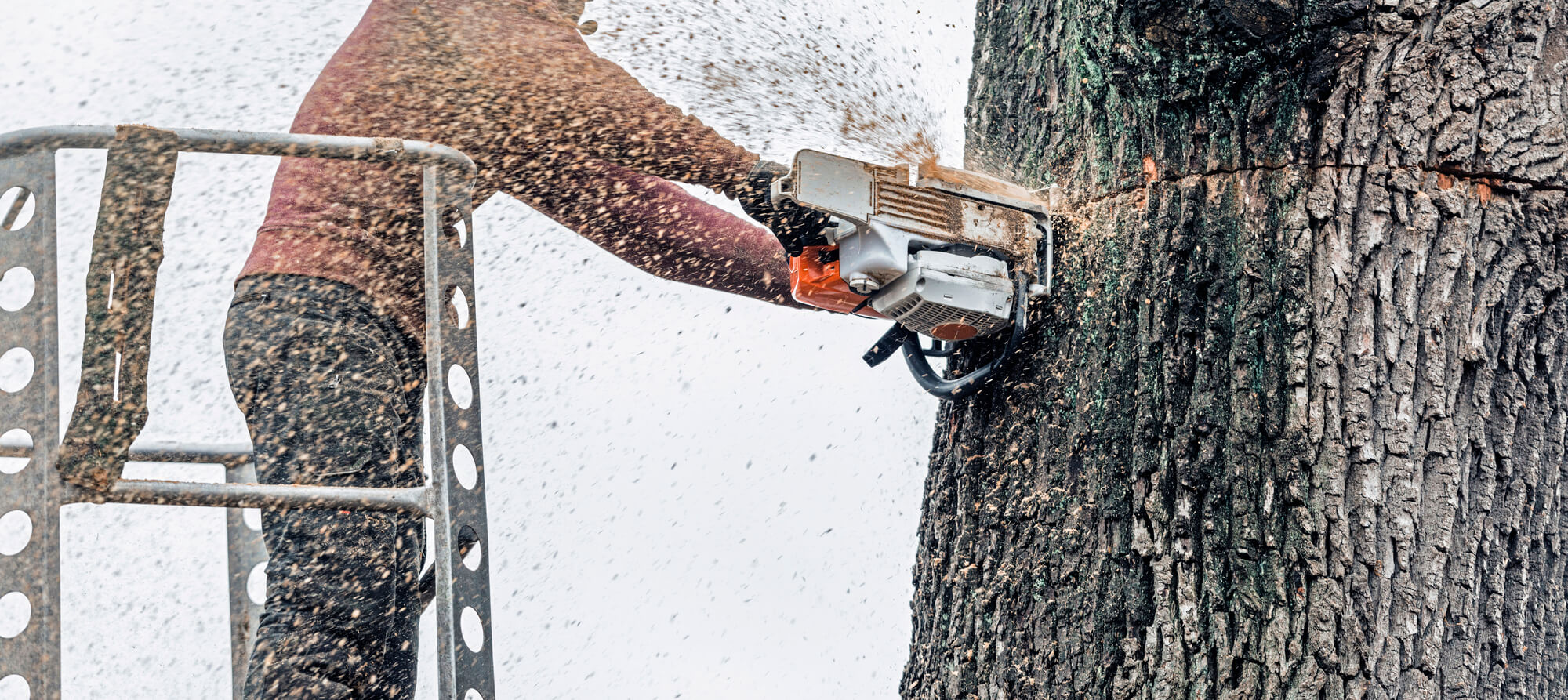 tree cutting service in river ridge - Big Easy Tree Removal