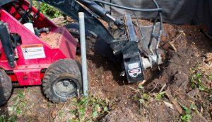 Louisiana Tree Stump Grinding Service