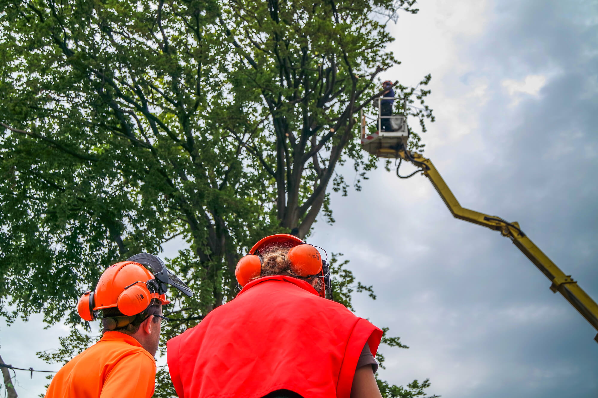 tree branch support services - Big Easy Tree Removal