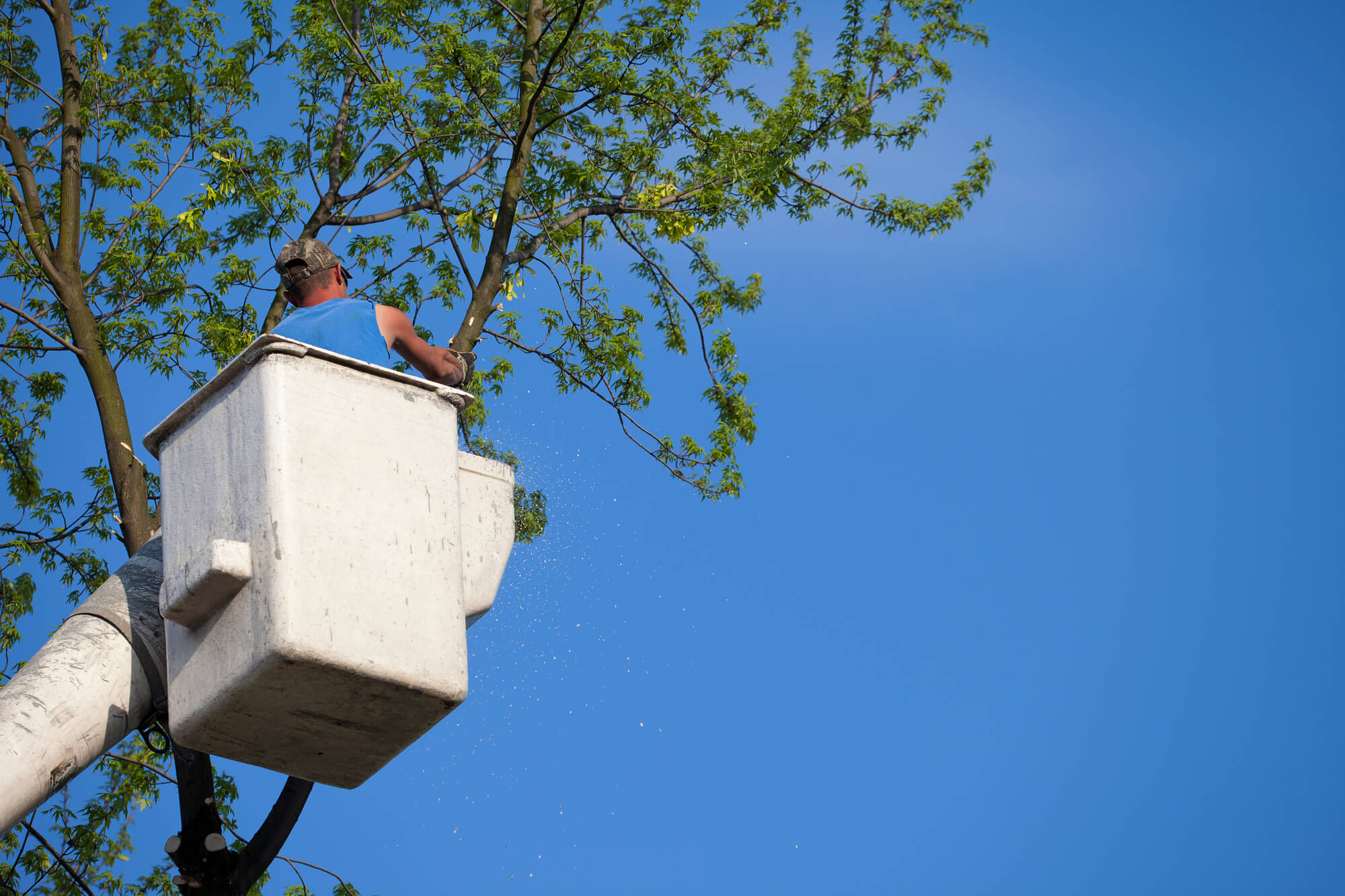 tree support system installation - Big Easy Tree Removal