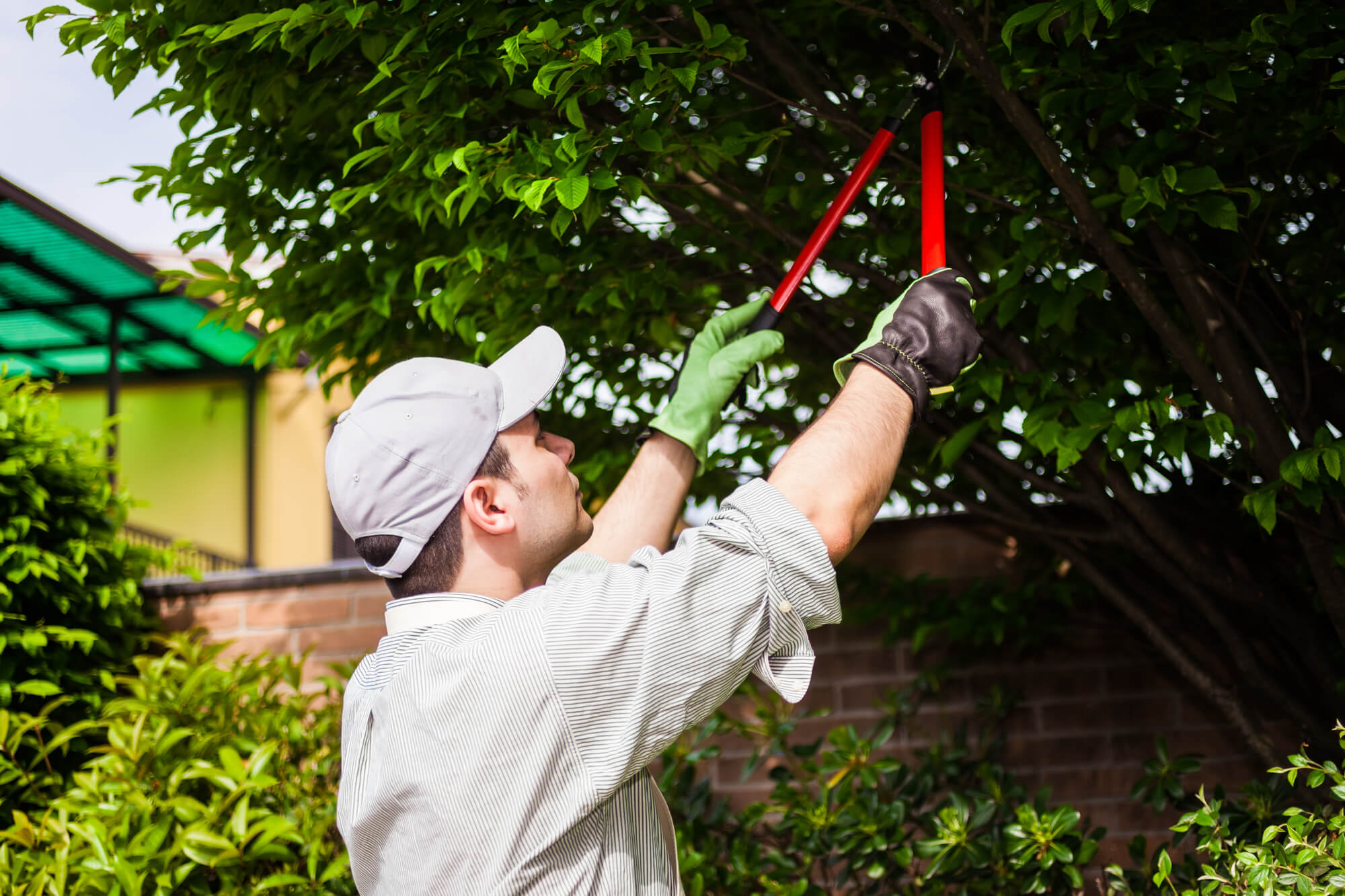 man pruning a tree in river ridge - Big Easy Tree Removal