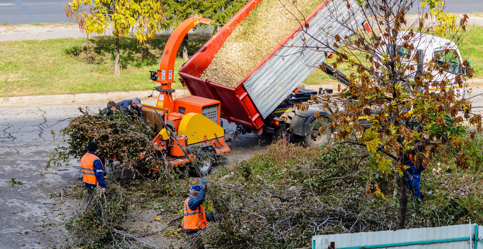 average cost for cutting down a tree - Big Easy Tree Removal