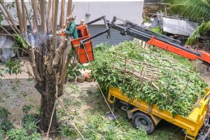 how expensive is tree removal - Big Easy Tree Removal