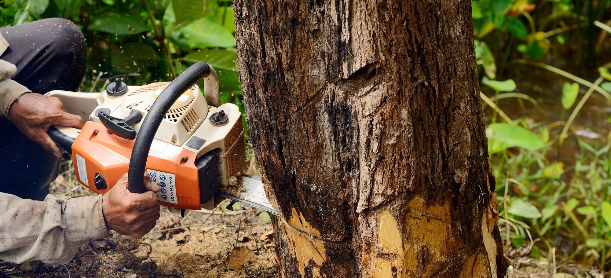 tree removal expensive - Big Easy Tree Removal